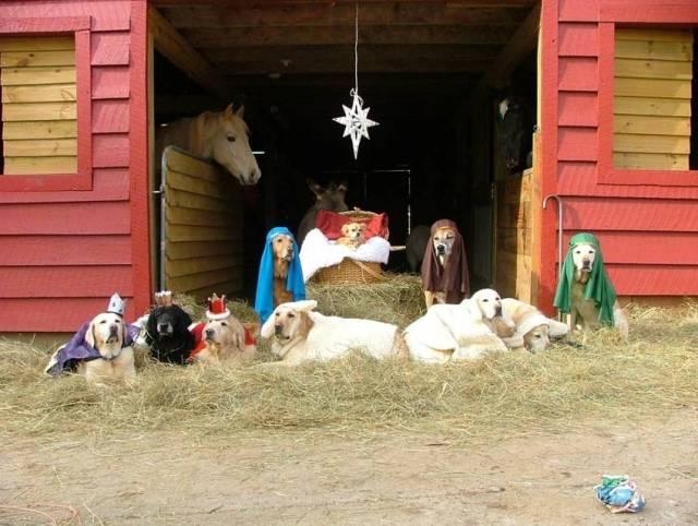 Labrador Christmas