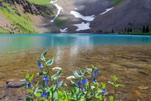 Alpine Lake Flowers